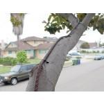 Tree-Shock Stromsystem
